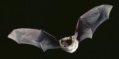 An Evening of Bats