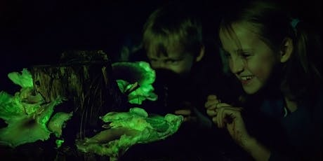 Ghost Mushroom Lane ForestrySA General Tours tickets