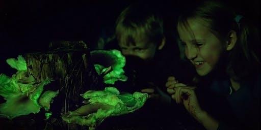 Ghost Mushroom Lane ForestrySA General Tours