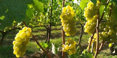 Franciacorta Vineyards Tour