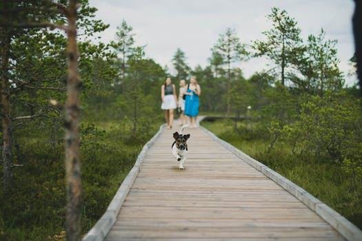 Walk & Talk: How to start exercising and stay