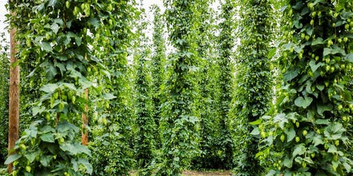 Introduction to Hops Tours
