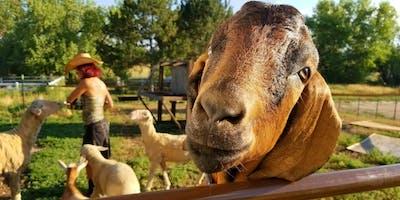 Open Farm Days- Rescued Friends Animal Sanctuary