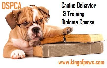 Canine Behavior & Training Diploma Course, Saturday @ DSPCA