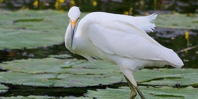 NaturallyGC Birds of our Wetlands Photography Walk