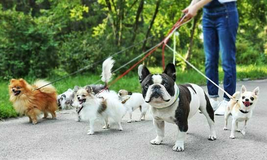 Animal Socialization and Interaction Training