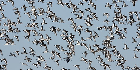 A Guide to Coastal and Wetland Birds tickets