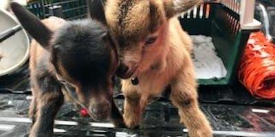 Goat Yoga Houston NettBar