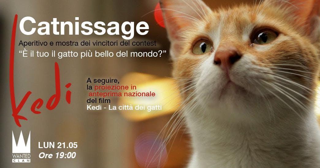 Kedi - La città dei gatti / Catnissage e ante