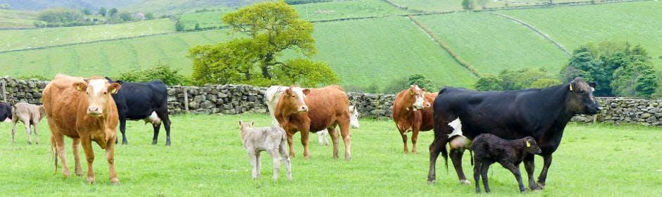 Global Forum 2018-agri benchmark beef/sheep