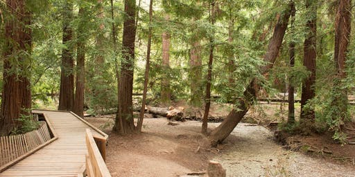Grove Guardians: Summer Youth Stewards at Redwood Grove