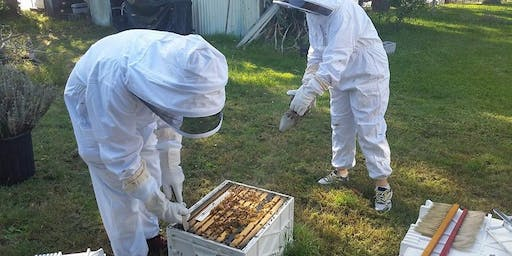 Hands On Beekeeping Workshop Newcastle - 3 Hours.