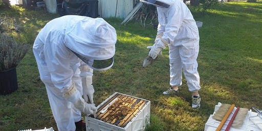 Hands On Beekeeping Workshop Newcastle - 4 Hours.
