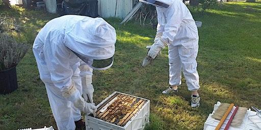 Hands On Beekeeping Workshop Newcastle - 4 Hours.