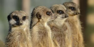 """5-Day Suricata """"Deep Dive"""" Training host by DCSO -..."""