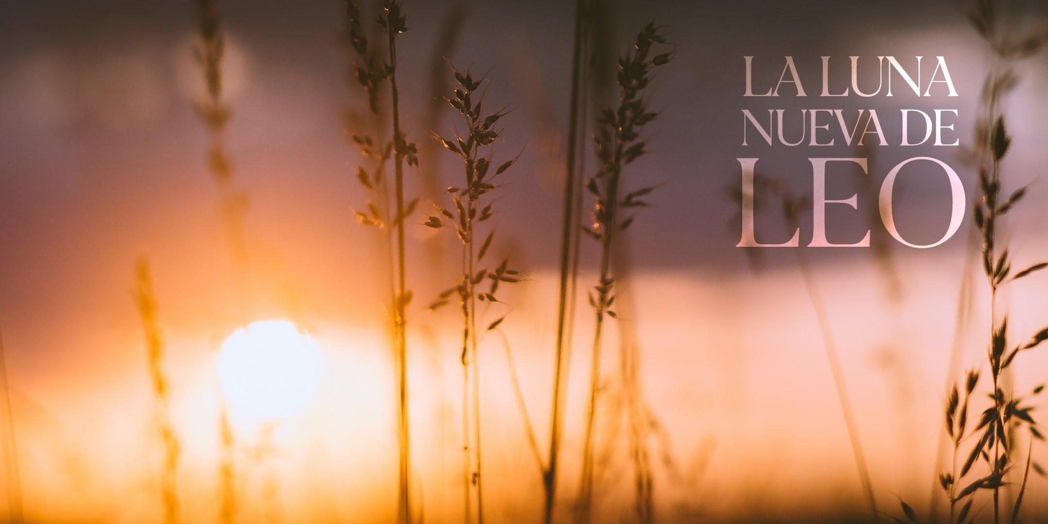 La Nueva Luna de Leo - Seminario de Una Noche - DORAL