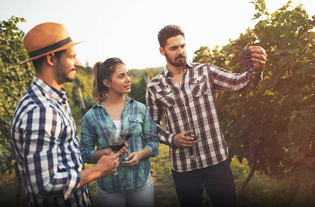 Tour Enogastronomico nel Monferrato | Vino, Merenda Sinoira e Visita Guidata