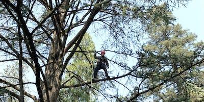 Tree Climbing 22 - 26 ottobre 2018