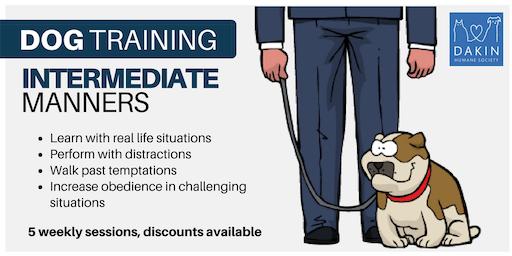 Intermediate Manners Dog Training -Springfield