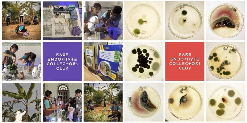 ART, SCIENCE & FOOD FUTURES—Genomic Gastronomy presents: endophyte.club