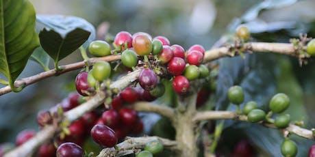 Coffee Origins - Counter Culture Asheville tickets