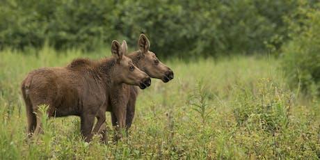 (Group 2) 2019 Magic of Alaska Nature Photography Tour + Bear Extravaganza tickets