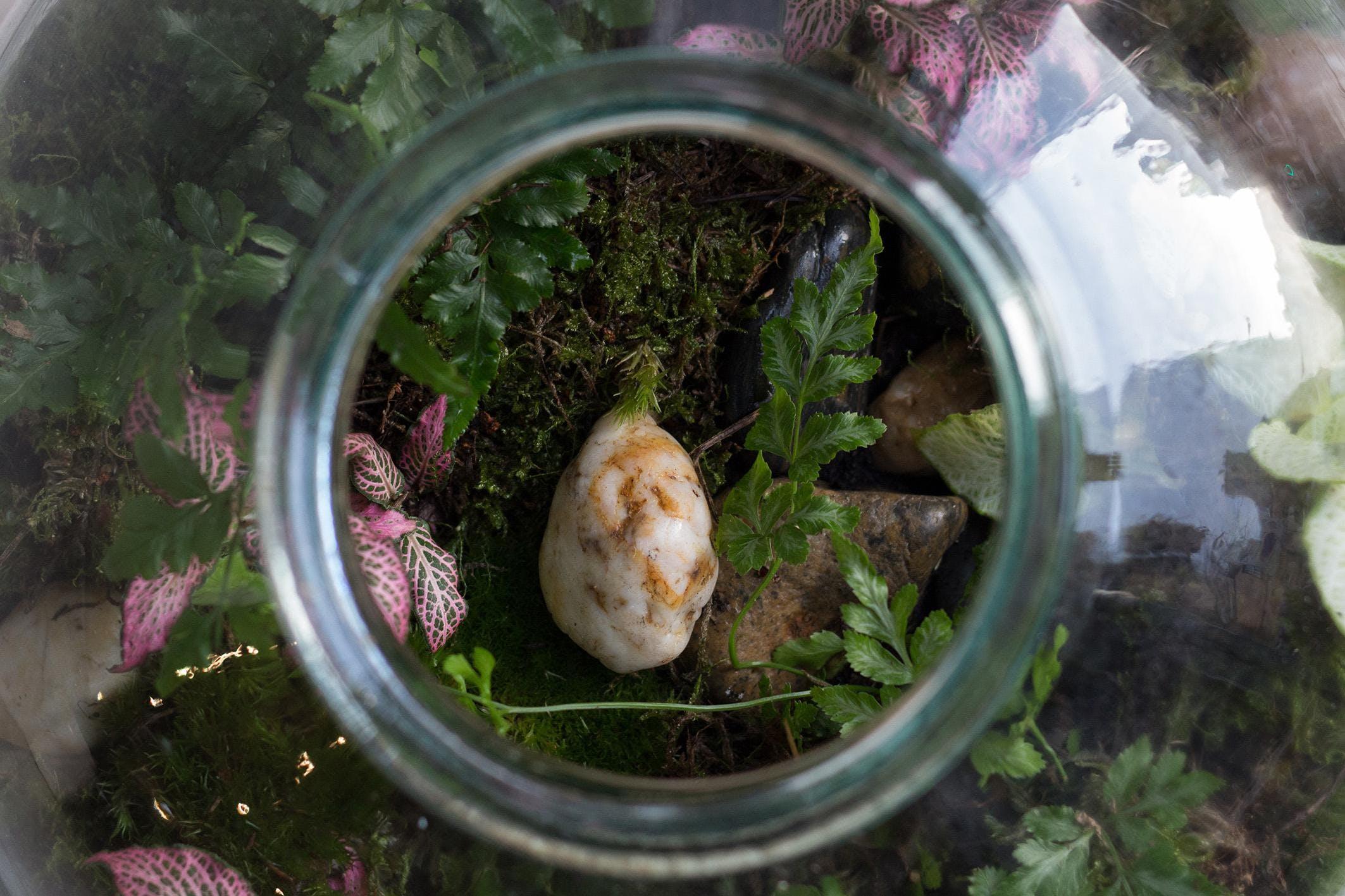 Make your own Pickle Jar Terrarium