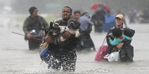 Animal Evac Foundation Course (CHC)