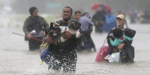 Animal Evac Foundation Course (AKL)