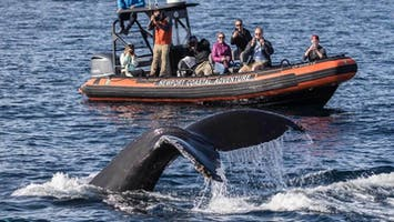 Ultimate Whale Watching Adventure