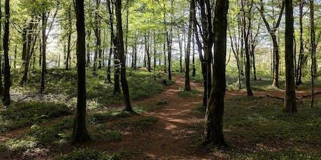 July 2019 Natural Mindfulness Forest Bathing Walk in Fforest Fawr tickets