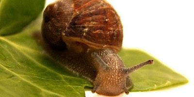 Integrated Pest Management for Gardeners workshop