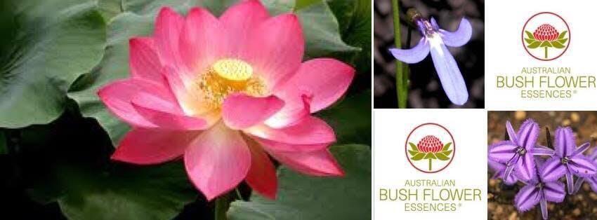 Australian bush flower essences 2 sep 18 evensi nearby events australian bush flower essences mightylinksfo