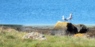 Strangford Lough and Ballyhenry island walking tour
