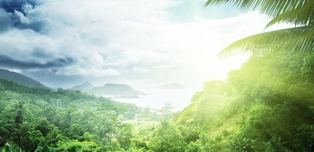Rainforest LWOL #2 - December 2018