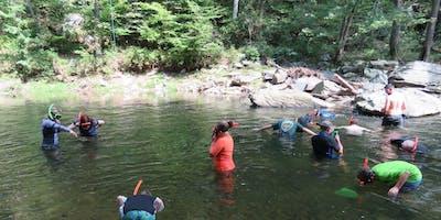 Snorkeling for Wildlife in Deer Creek