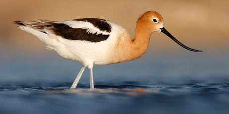 Pacific Flyway tickets