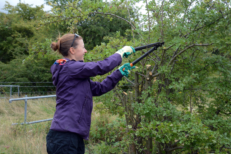 Volunteer Work Day: Woodhouse Washlands Natur