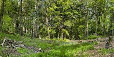 Volunteer Work Day: Greno Woods Nature Reserve