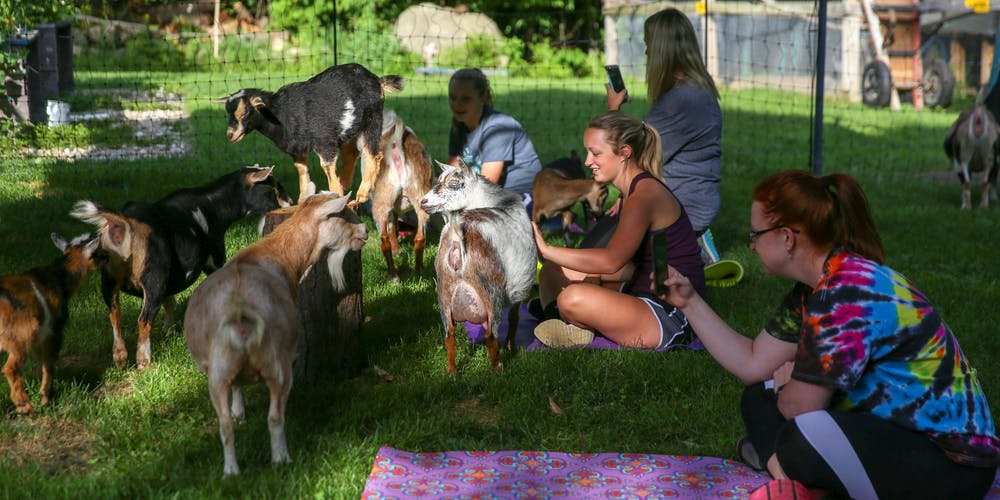 Goat Yoga In The Woods NY For Everyone Tickets, Multiple Dates