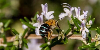 Create a 'Hotel' for Native Bees and Beneficial Insects