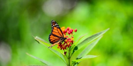 Butterfly Walk @ Deering Estate - Foundation Member RSVP tickets