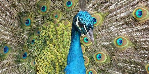 Animalia: The Animal Kingdom and Sensation with Jonathan Hardy