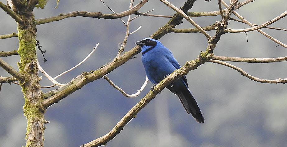 Global Birding: Northern Ecuador