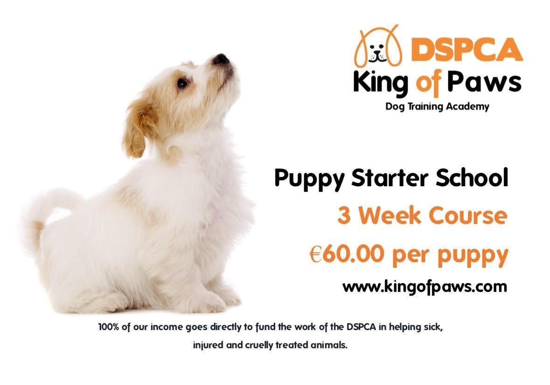 Puppy Starter School, Thursday, DSPCA Indoor