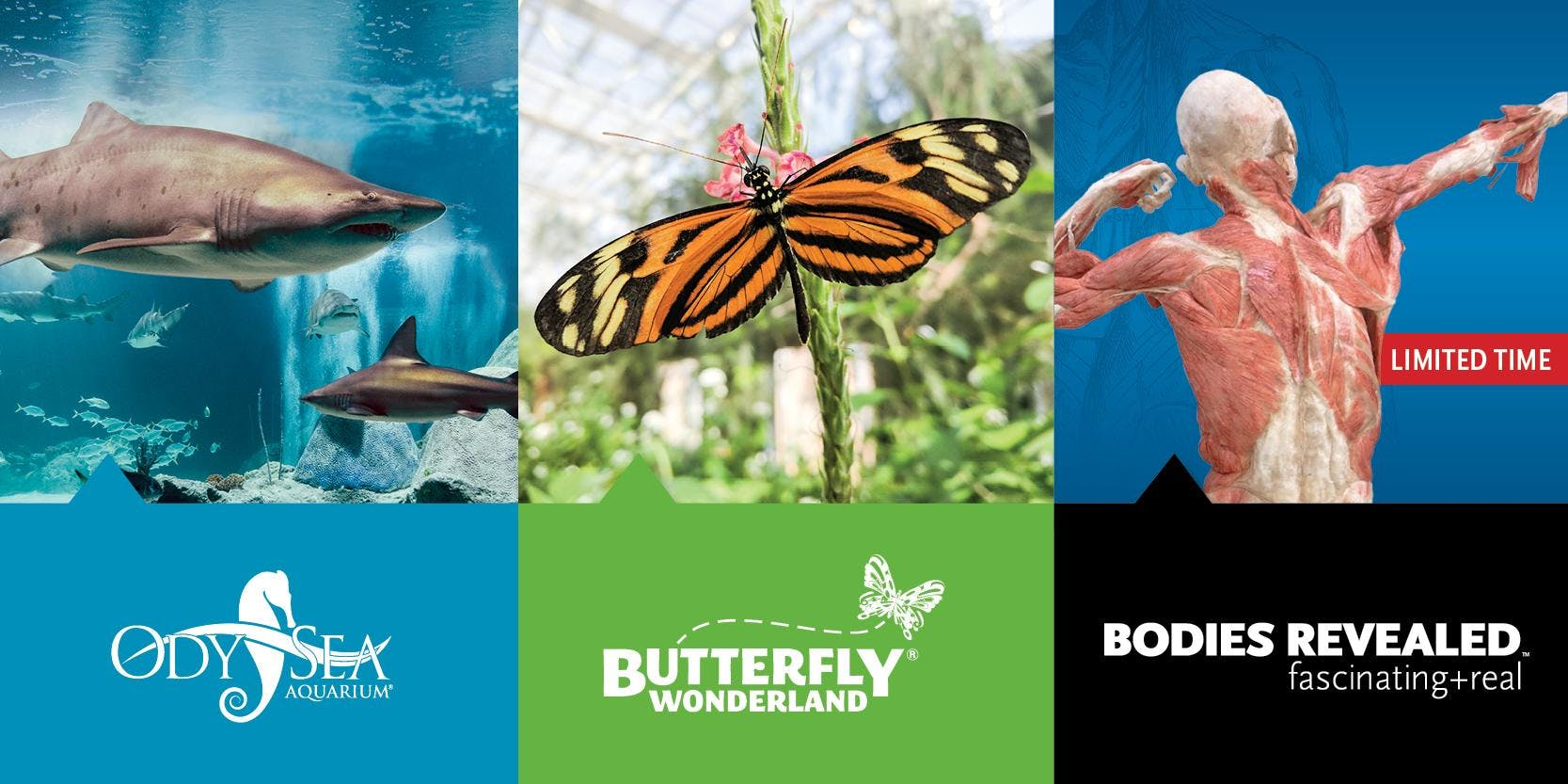Educator Open House - August 21st, 2018 - OdySea Aquarium, Butterfly Wonderland & Bodies Revealed