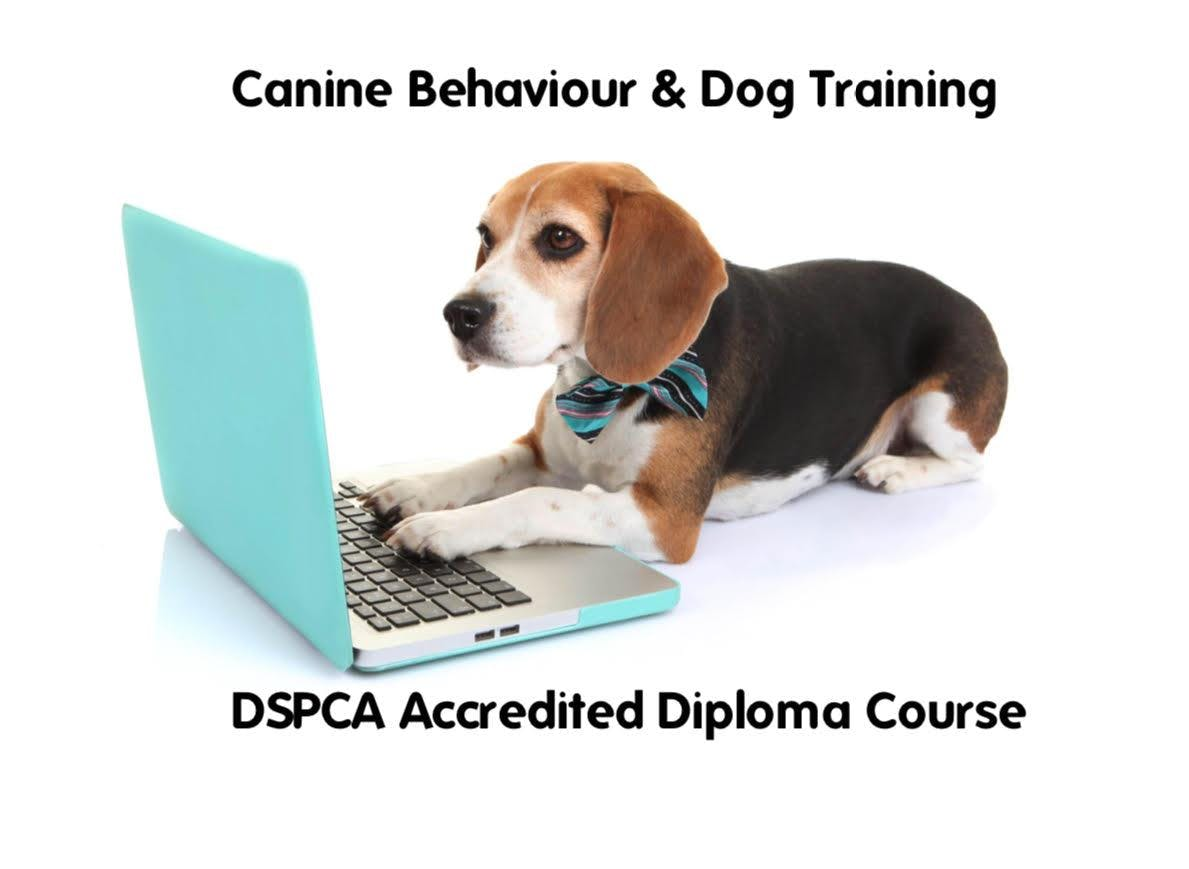 Canine Behavior & Training Diploma Course 2019