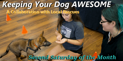 Keeping Your Dog AWESOME