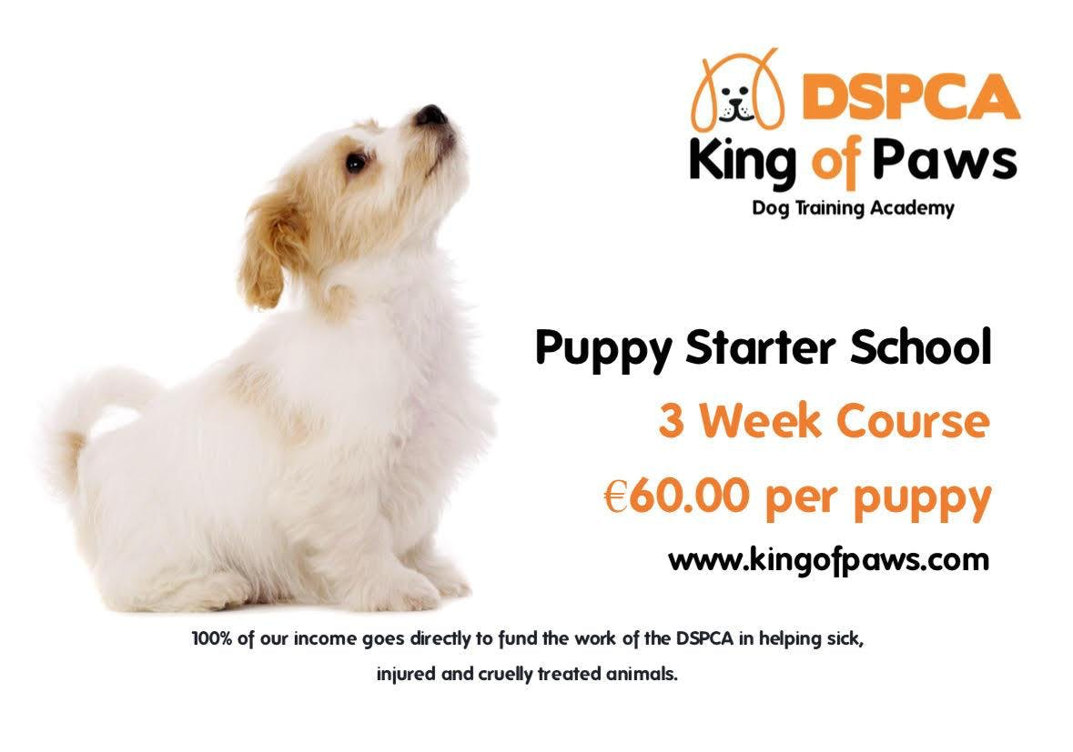 Puppy Starter School, Sunday, DSPCA Indoor
