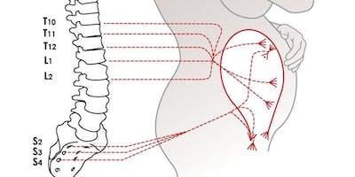 An Osteopathic Approach in Obstetrics, Gynecology, Pulmonology, Cardiology, Gastroenterology, Urology and Geriatrics.
